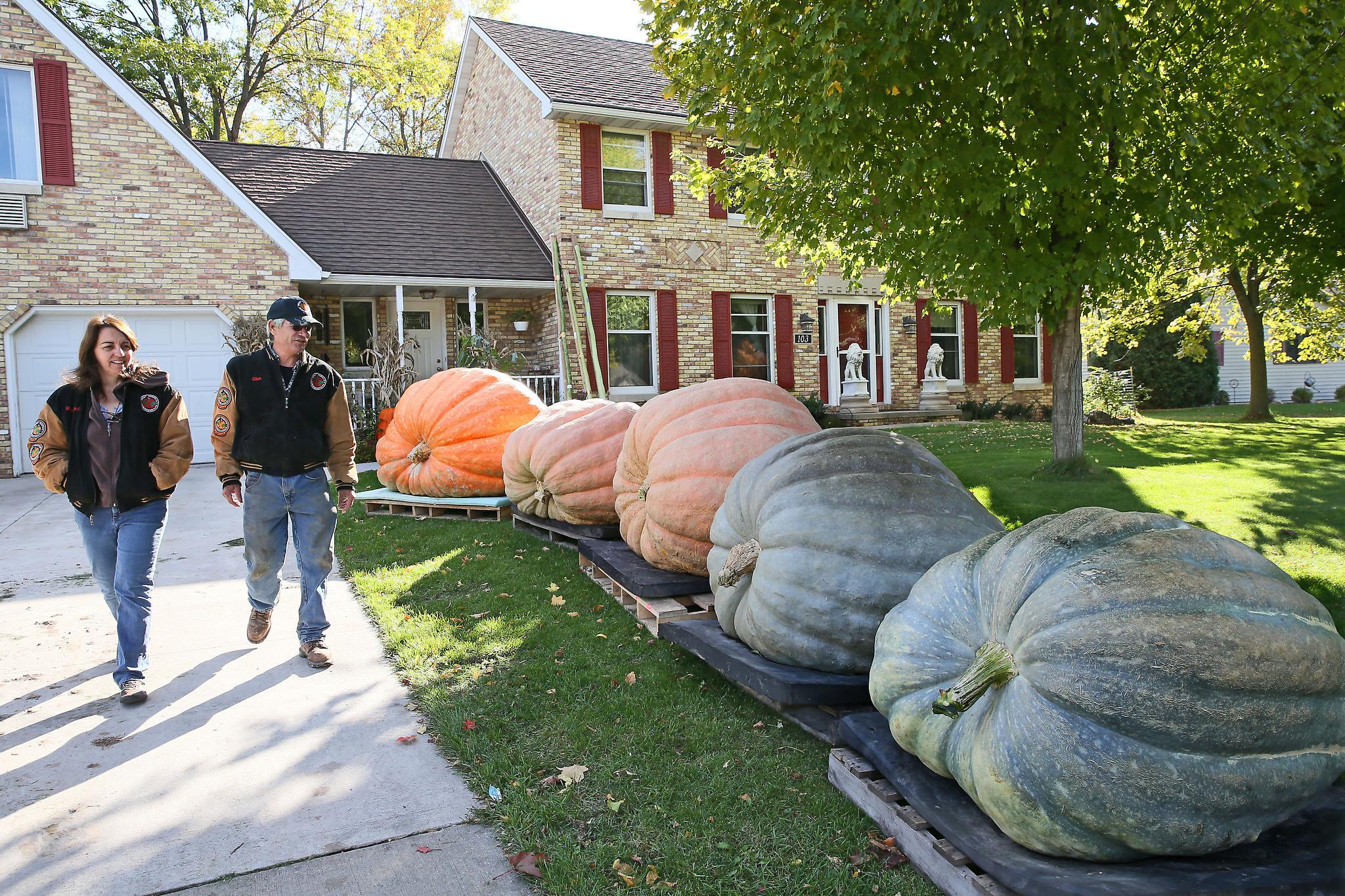 MJS Pumpkin, nws, sears, 7